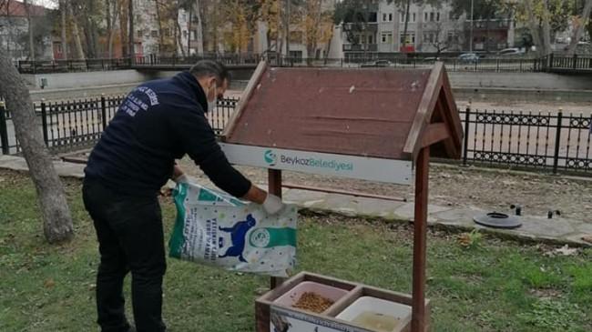 Beykoz Belediyesi kısıtlamada can dostlarımızı unutmadı